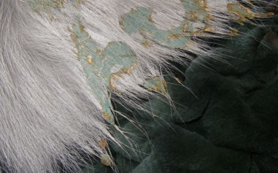 Samples -  cloque mink patinated gold fox